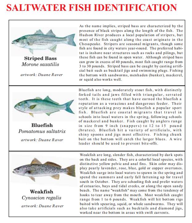 saltfish1